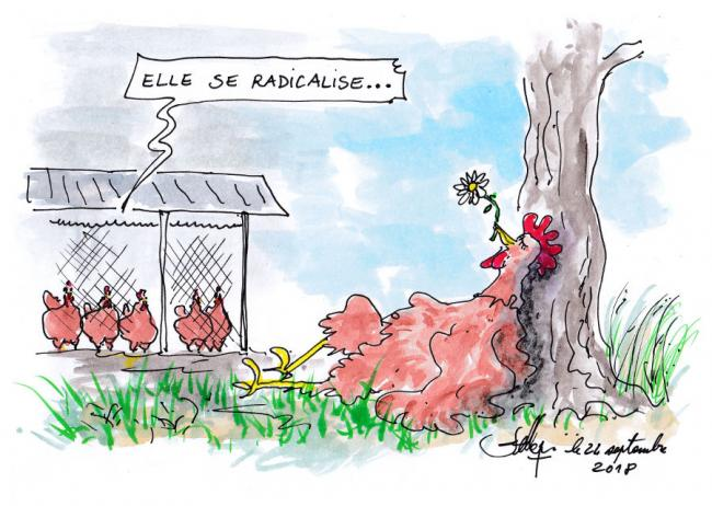 La radicalisation 1