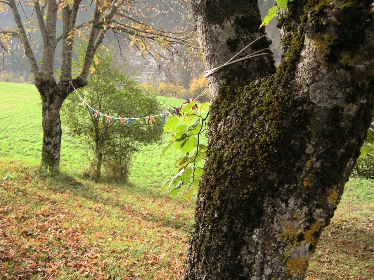 Couleurs d'automne (1)