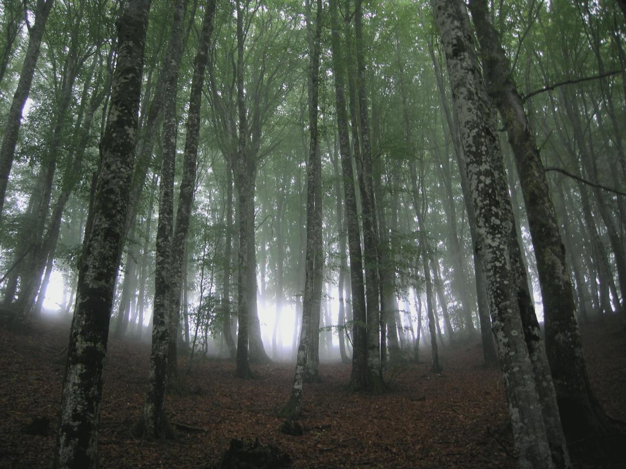 Troncs dans la brume