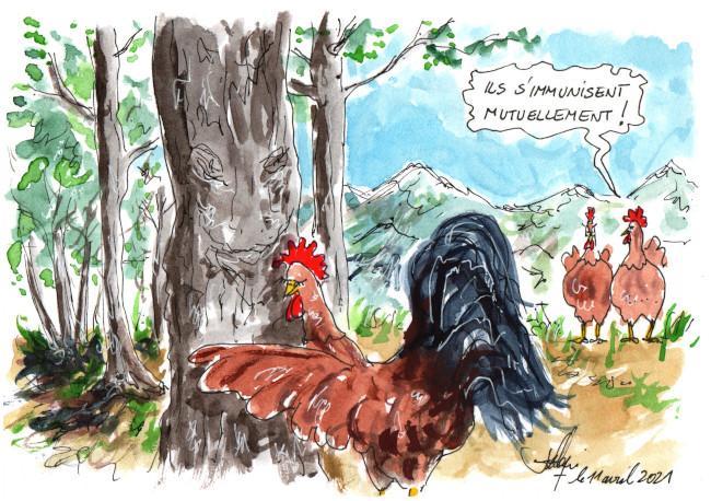 L arbre et le coq